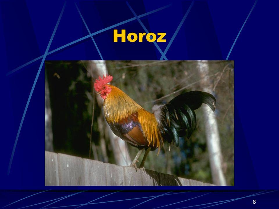 Horoz