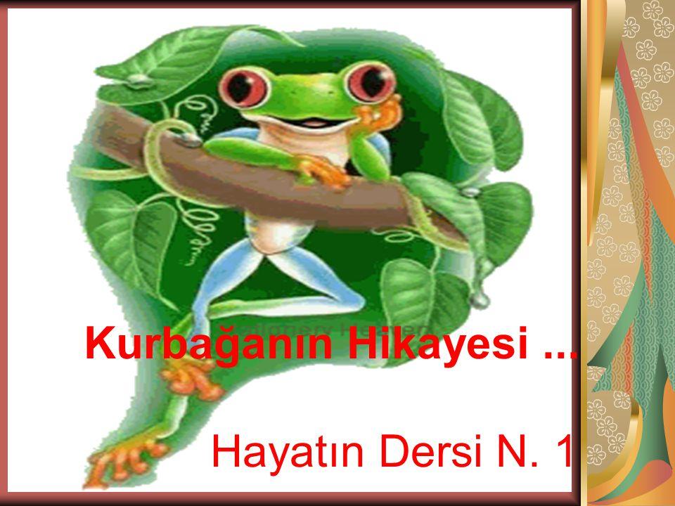Kurbağanın Hikayesi ... Hayatın Dersi N. 1