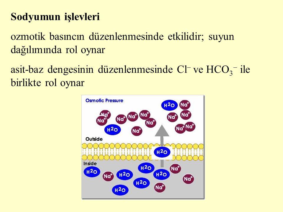 Sodyumun işlevleri ozmotik basıncın düzenlenmesinde etkilidir; suyun dağılımında rol oynar.