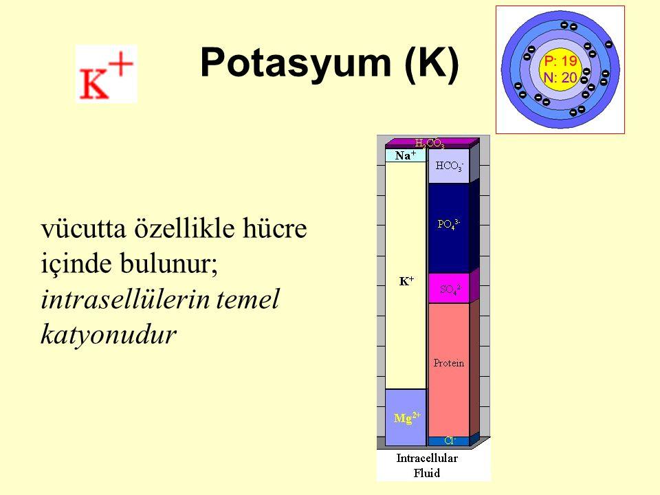 Potasyum (K) vücutta özellikle hücre içinde bulunur; intrasellülerin temel katyonudur