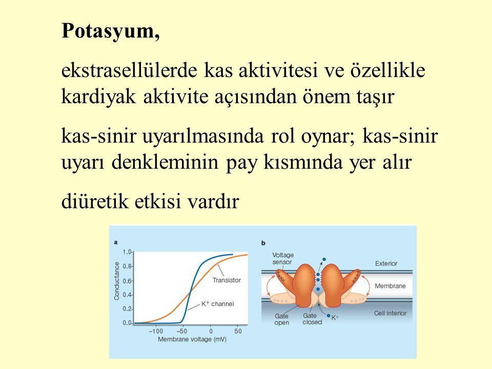 Potasyum, ekstrasellülerde kas aktivitesi ve özellikle kardiyak aktivite açısından önem taşır.