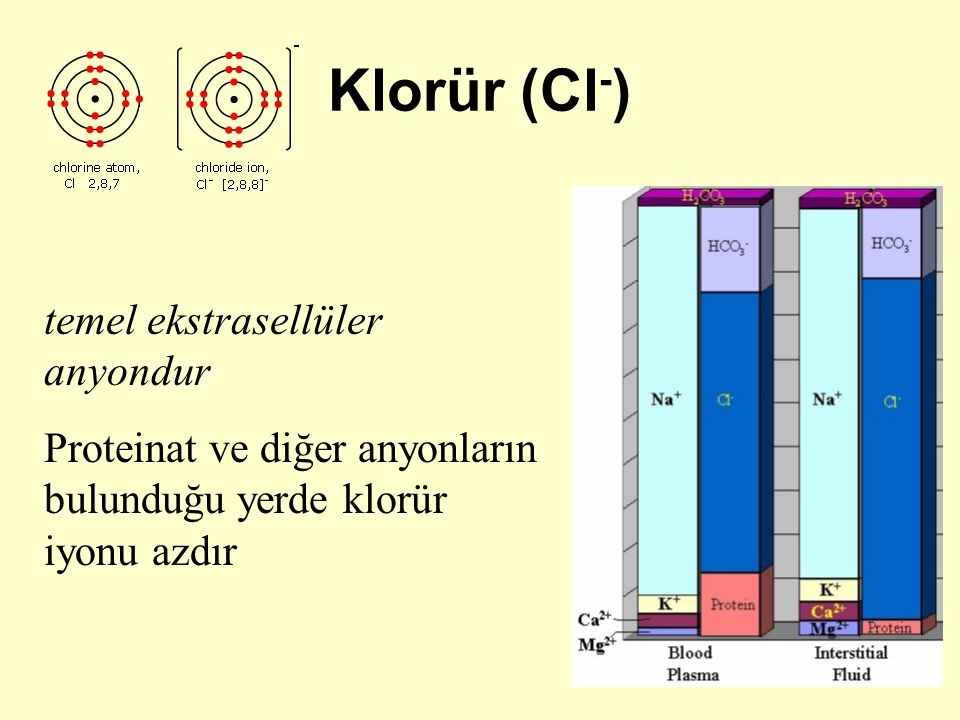 Klorür (Cl-) temel ekstrasellüler anyondur