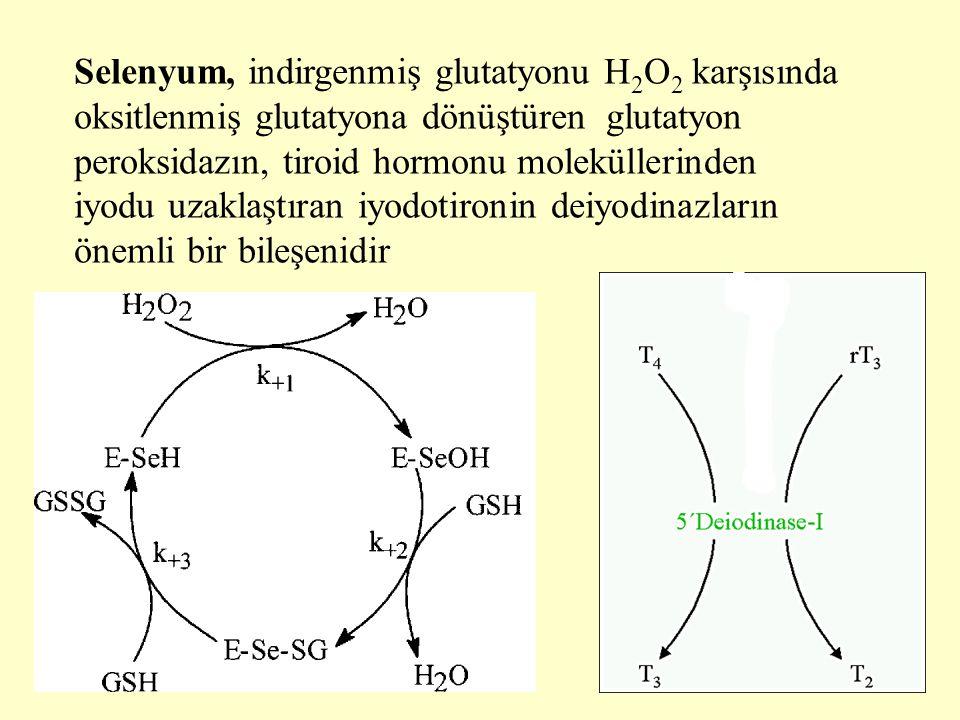 Selenyum, indirgenmiş glutatyonu H2O2 karşısında oksitlenmiş glutatyona dönüştüren glutatyon peroksidazın, tiroid hormonu moleküllerinden iyodu uzaklaştıran iyodotironin deiyodinazların önemli bir bileşenidir