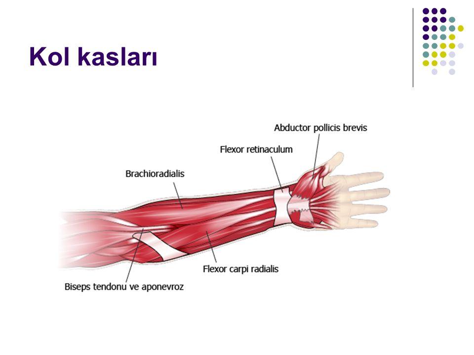 Kol kasları