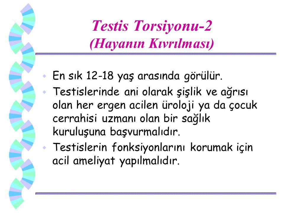 Testis Torsiyonu-2 (Hayanın Kıvrılması)
