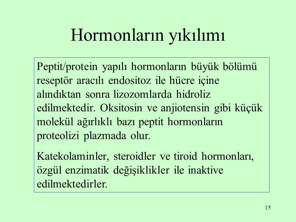 Hormonların yıkılımı