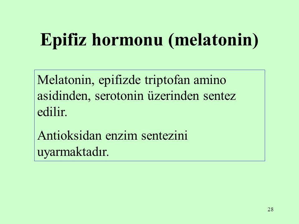 Epifiz hormonu (melatonin)
