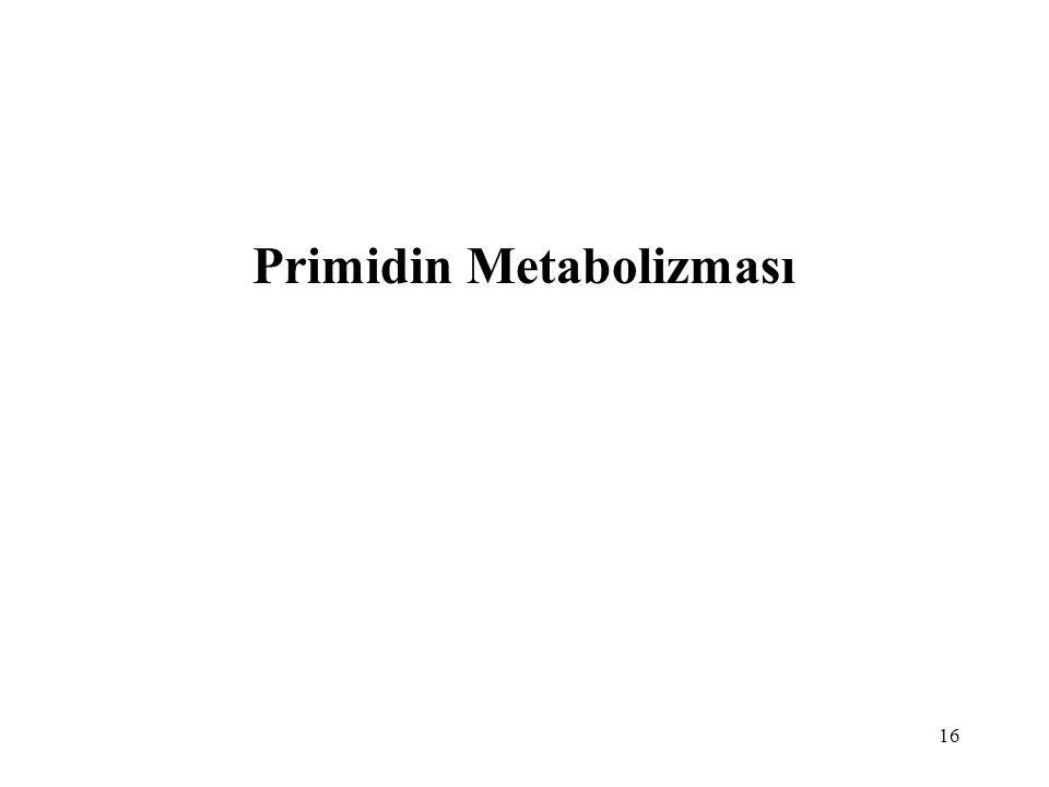 Primidin Metabolizması
