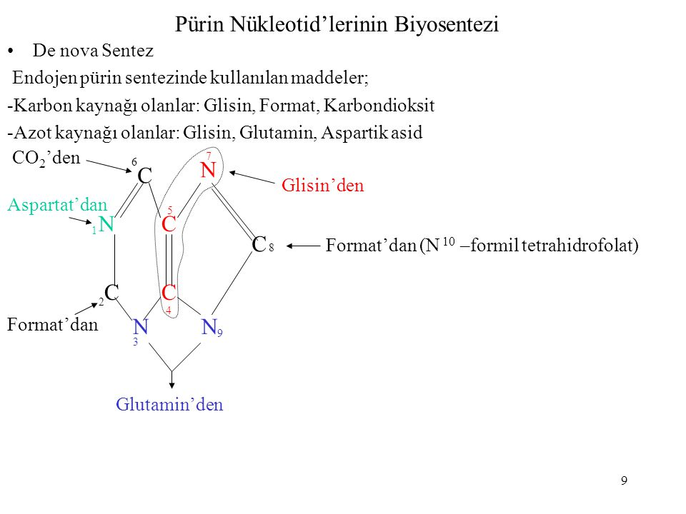 Pürin Nükleotid'lerinin Biyosentezi