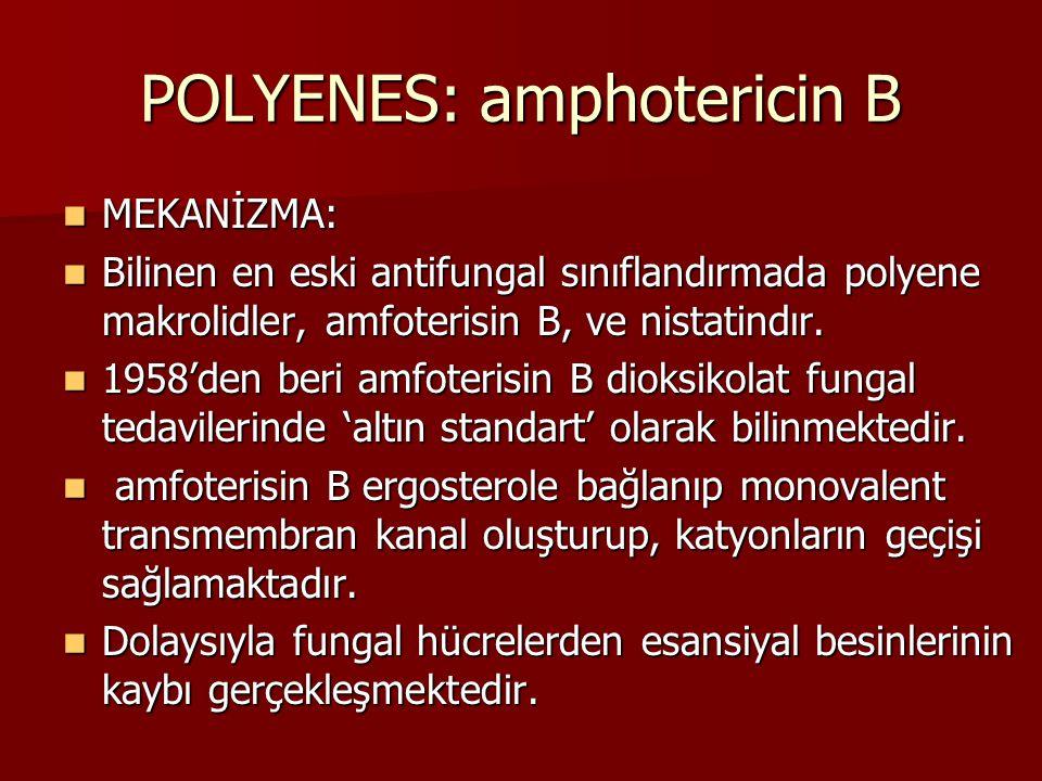 POLYENES: amphotericin B
