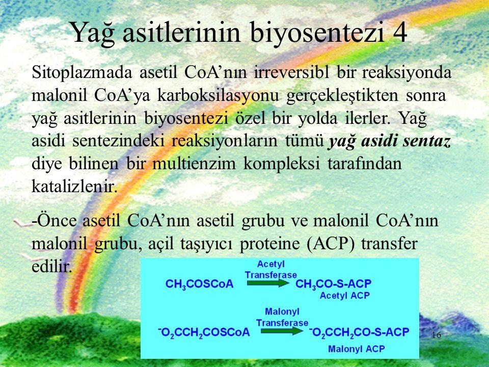 Yağ asitlerinin biyosentezi 4