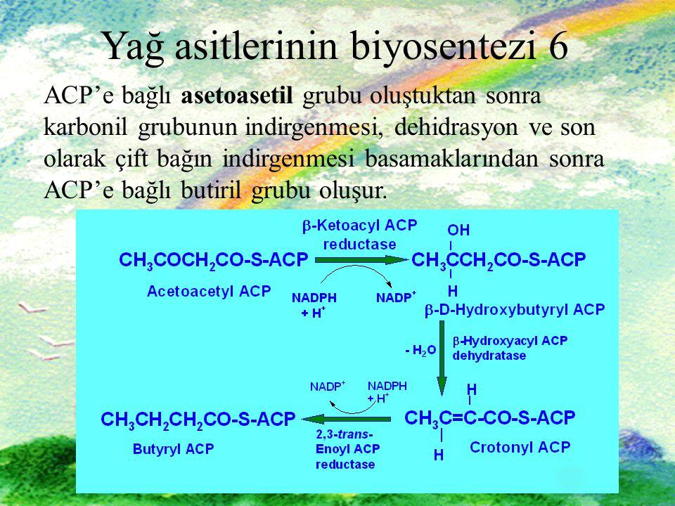 Yağ asitlerinin biyosentezi 6
