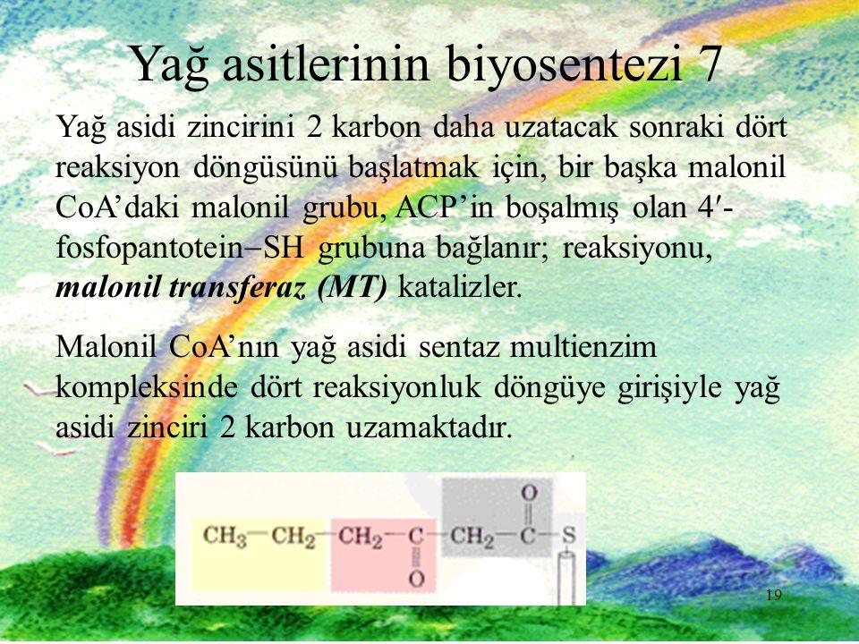 Yağ asitlerinin biyosentezi 7