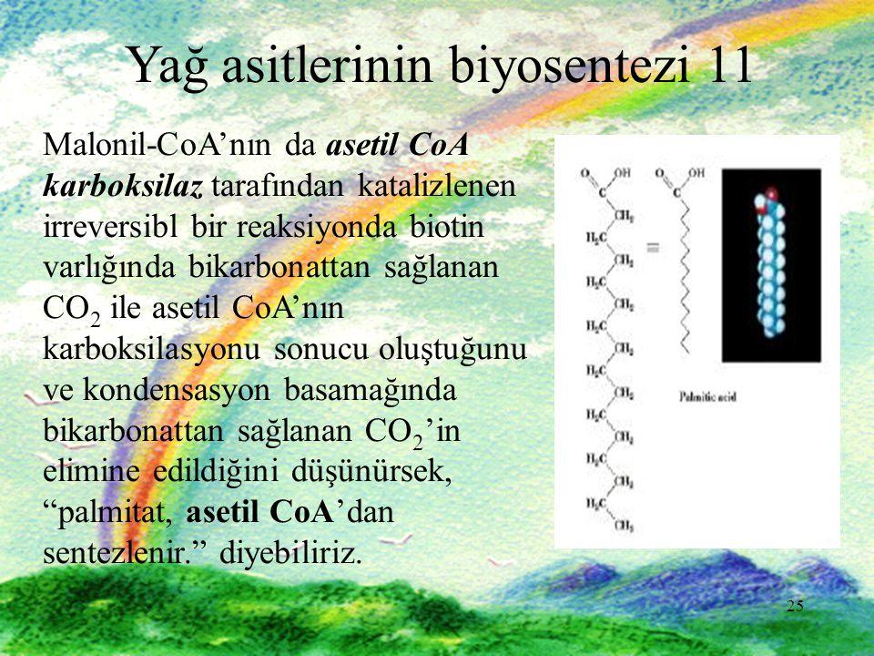 Yağ asitlerinin biyosentezi 11