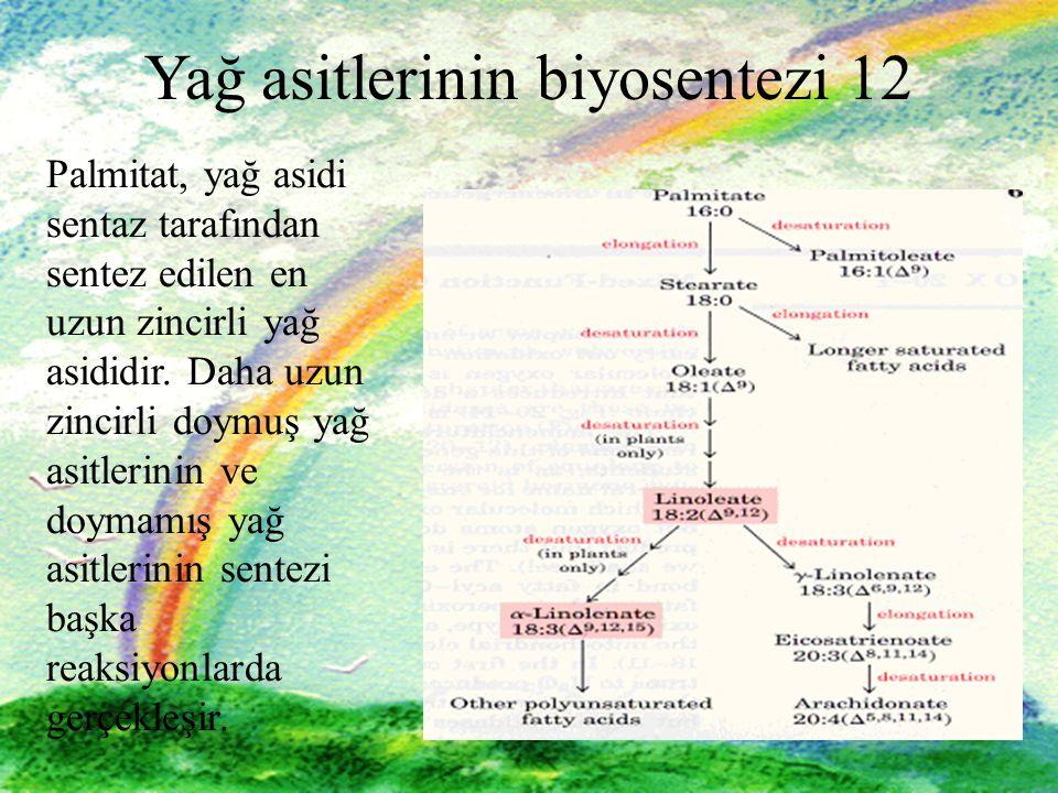 Yağ asitlerinin biyosentezi 12