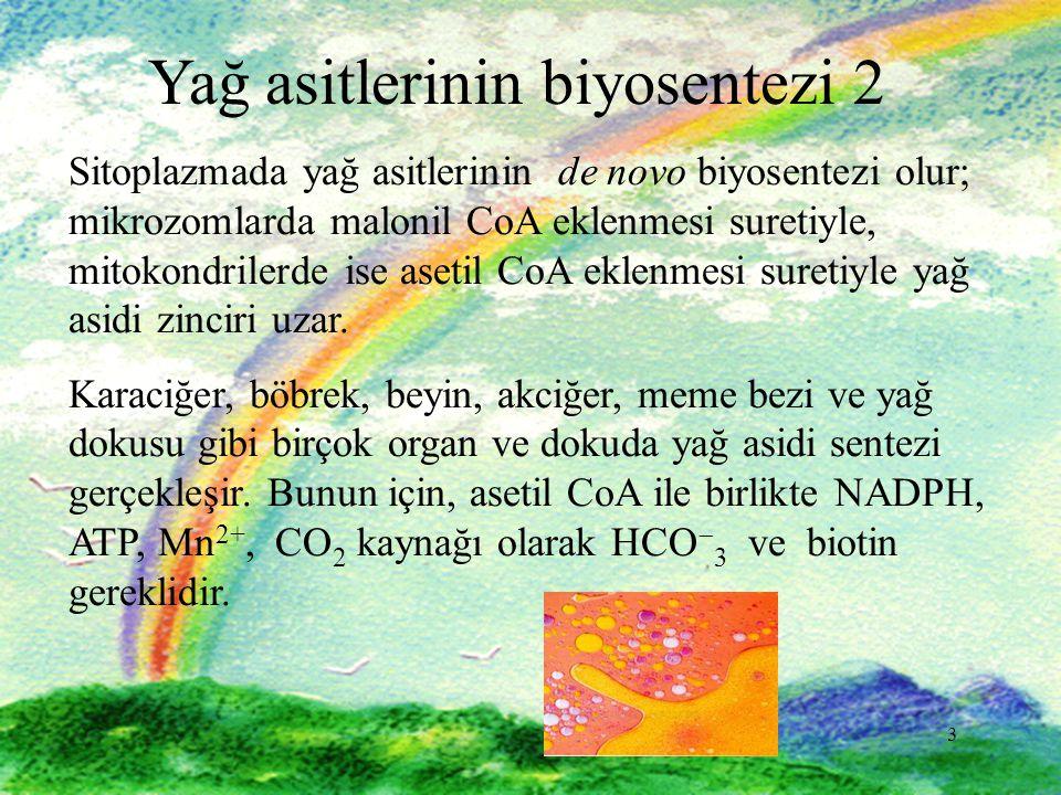 Yağ asitlerinin biyosentezi 2
