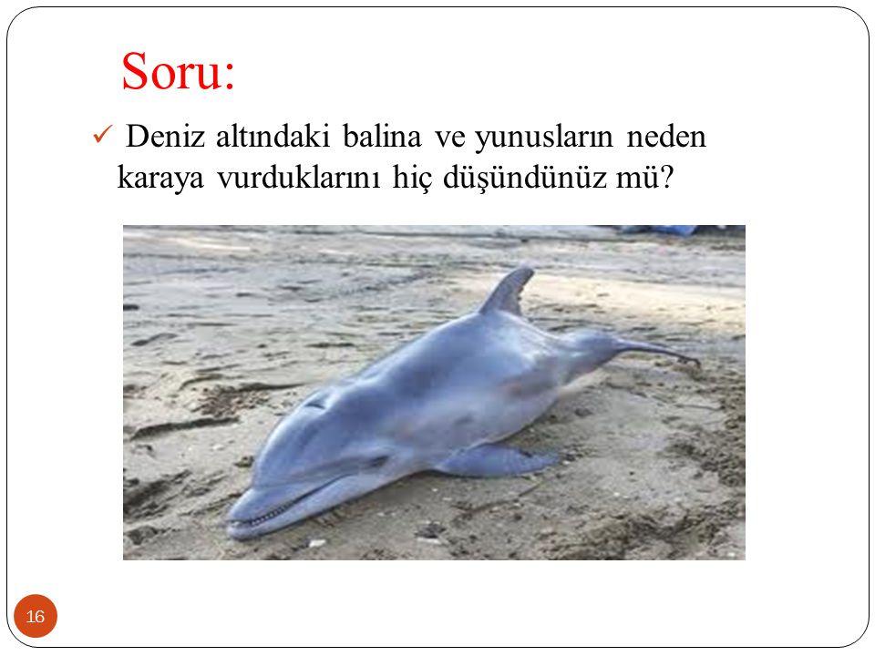 Soru: Deniz altındaki balina ve yunusların neden karaya vurduklarını hiç düşündünüz mü