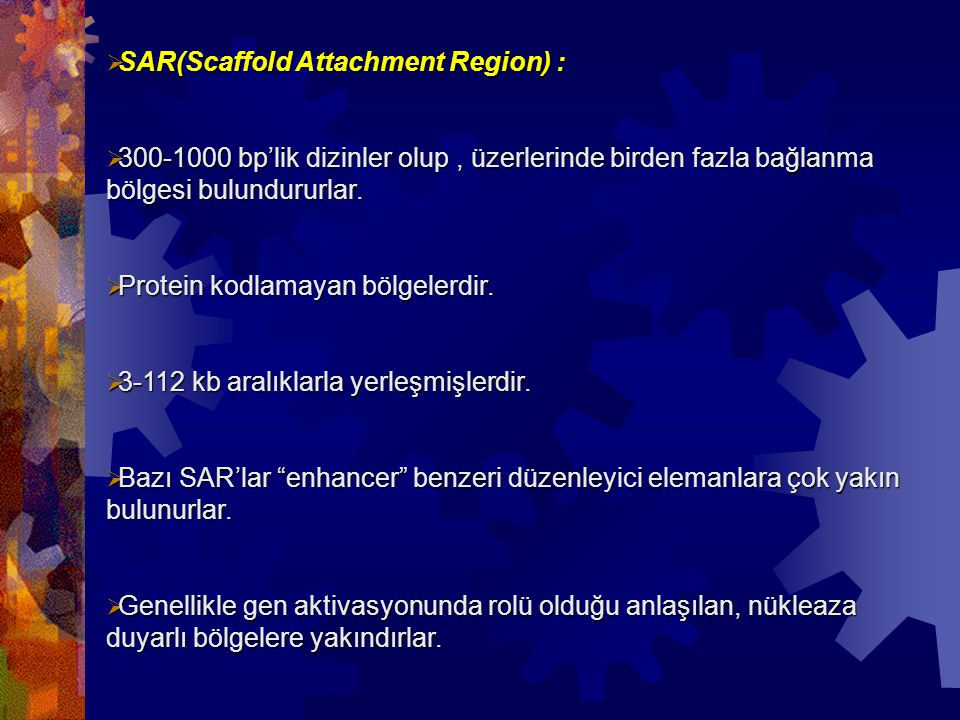 SAR(Scaffold Attachment Region) :