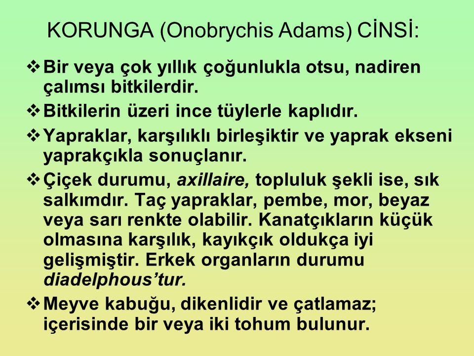 KORUNGA (Onobrychis Adams) CİNSİ: