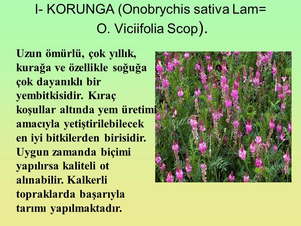 I- KORUNGA (Onobrychis sativa Lam= O. Viciifolia Scop).