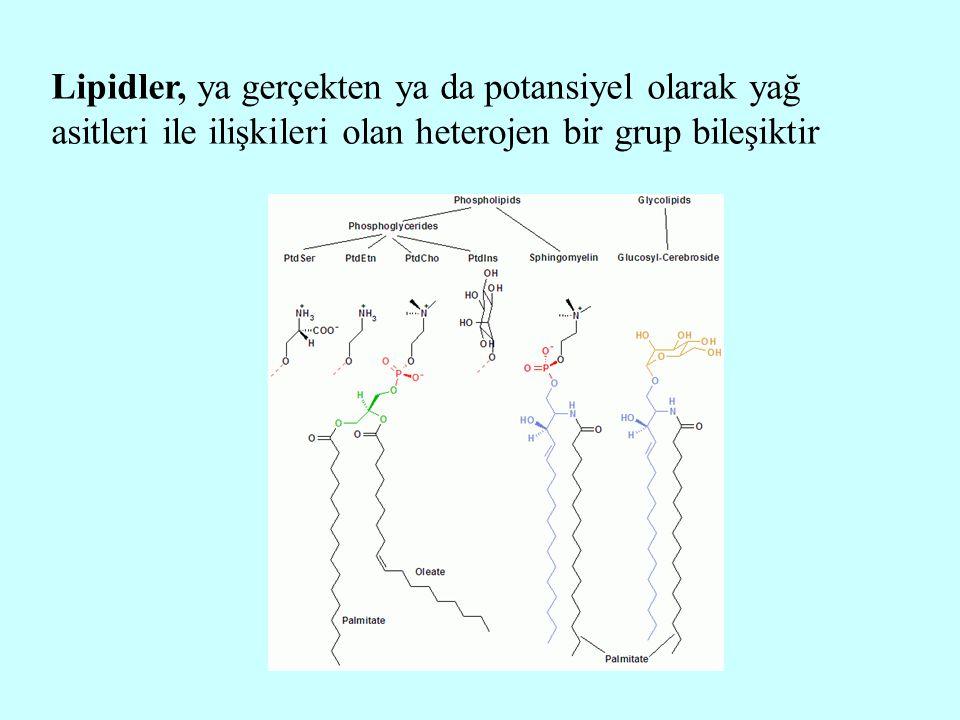 Lipidler, ya gerçekten ya da potansiyel olarak yağ asitleri ile ilişkileri olan heterojen bir grup bileşiktir