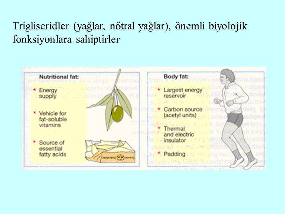 Trigliseridler (yağlar, nötral yağlar), önemli biyolojik fonksiyonlara sahiptirler