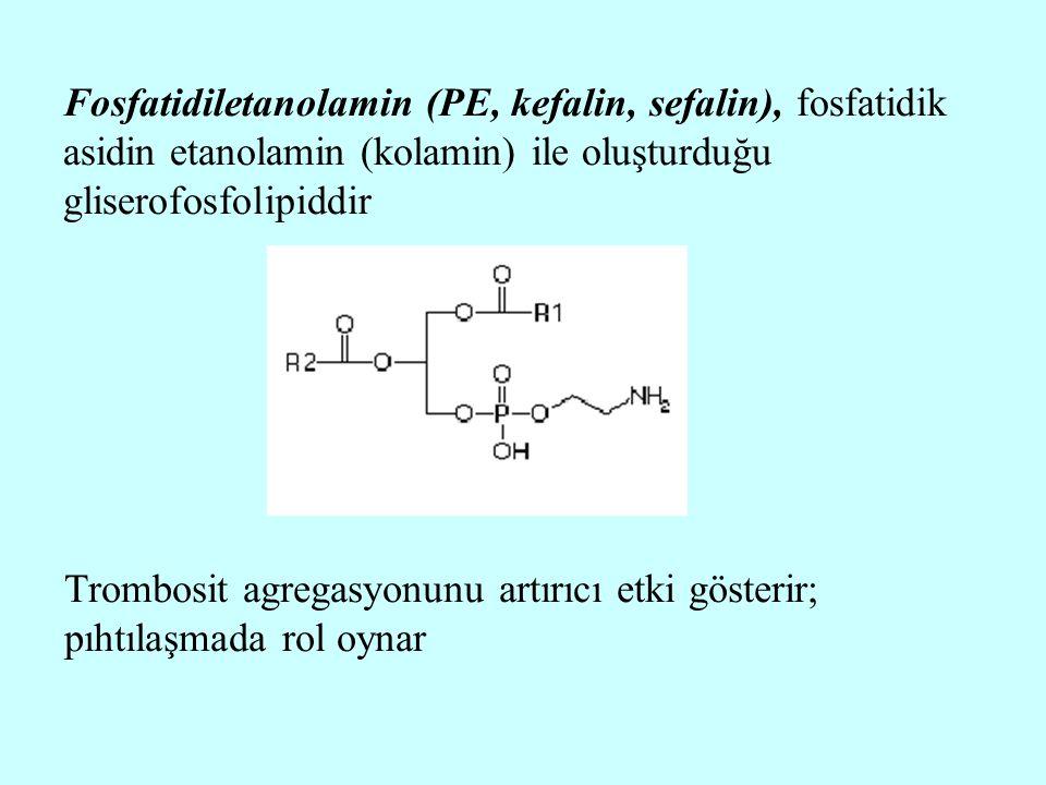 Fosfatidiletanolamin (PE, kefalin, sefalin), fosfatidik asidin etanolamin (kolamin) ile oluşturduğu gliserofosfolipiddir