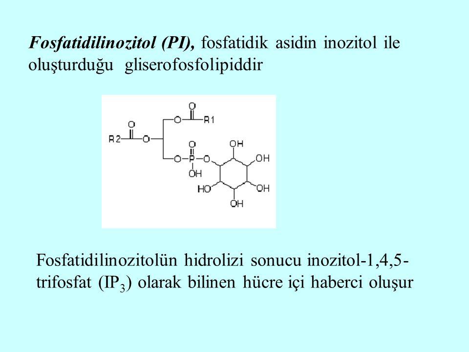 Fosfatidilinozitol (PI), fosfatidik asidin inozitol ile oluşturduğu gliserofosfolipiddir