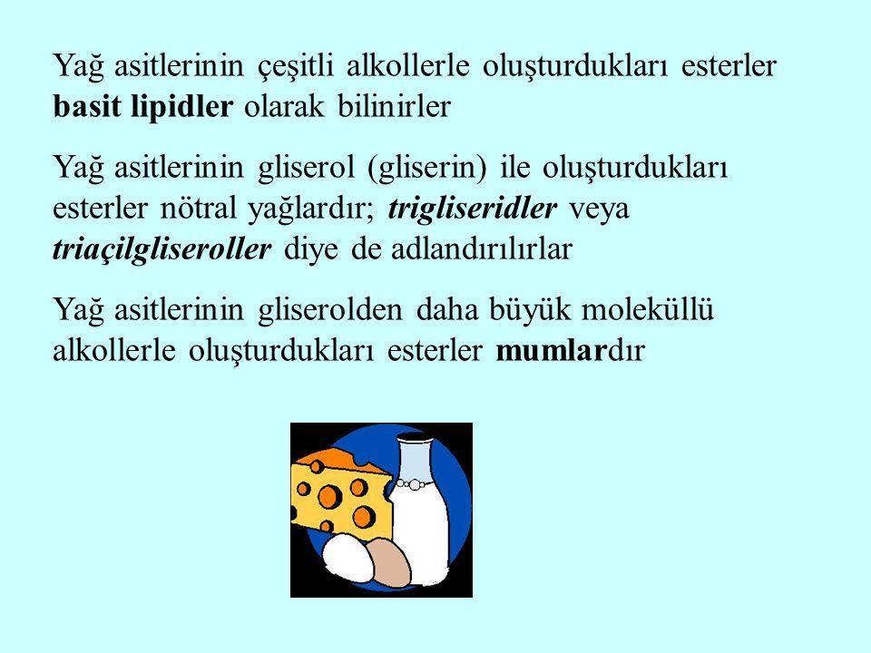 Yağ asitlerinin çeşitli alkollerle oluşturdukları esterler basit lipidler olarak bilinirler