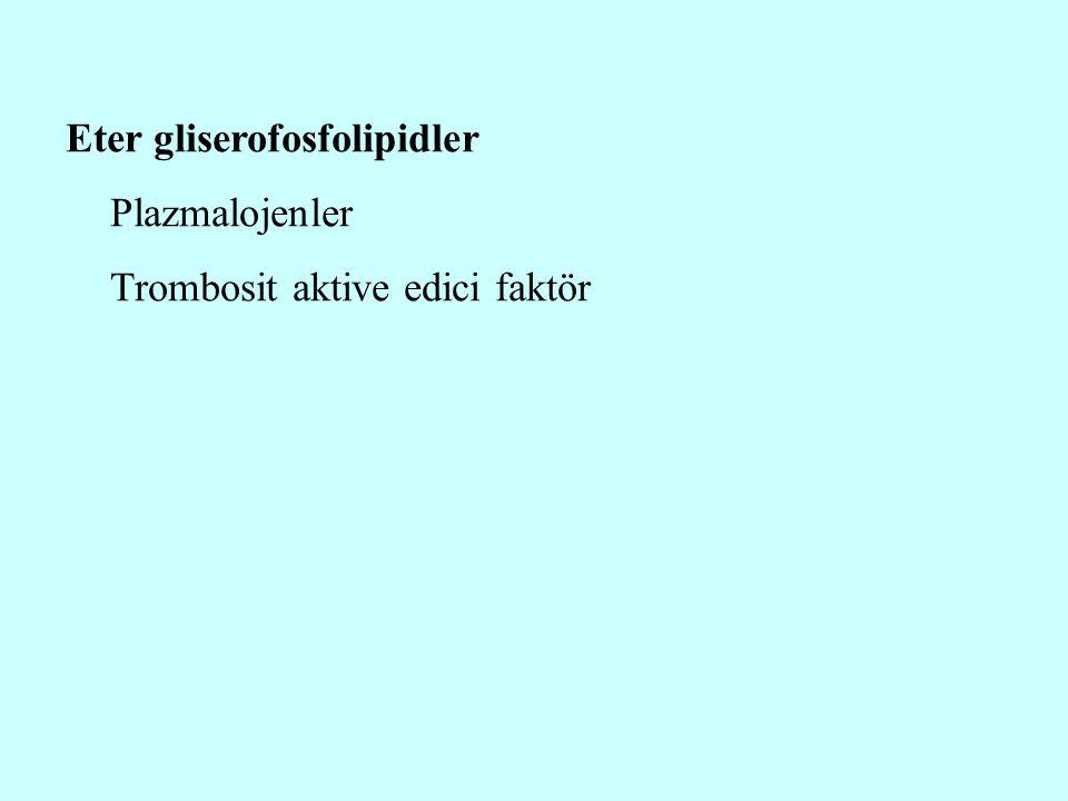 Eter gliserofosfolipidler