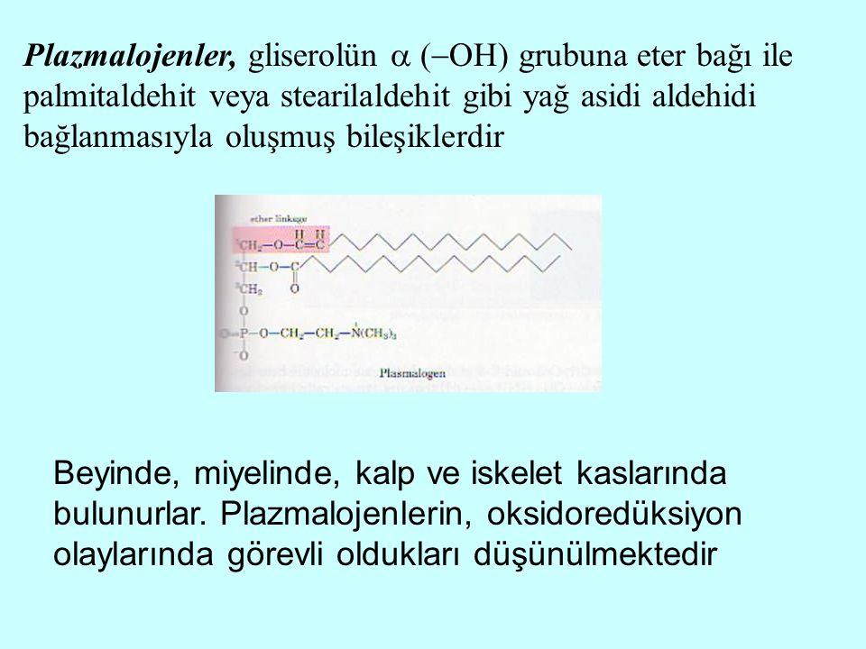Plazmalojenler, gliserolün  (OH) grubuna eter bağı ile palmitaldehit veya stearilaldehit gibi yağ asidi aldehidi bağlanmasıyla oluşmuş bileşiklerdir