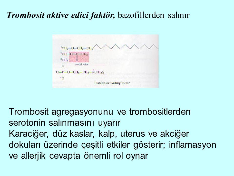 Trombosit aktive edici faktör, bazofillerden salınır