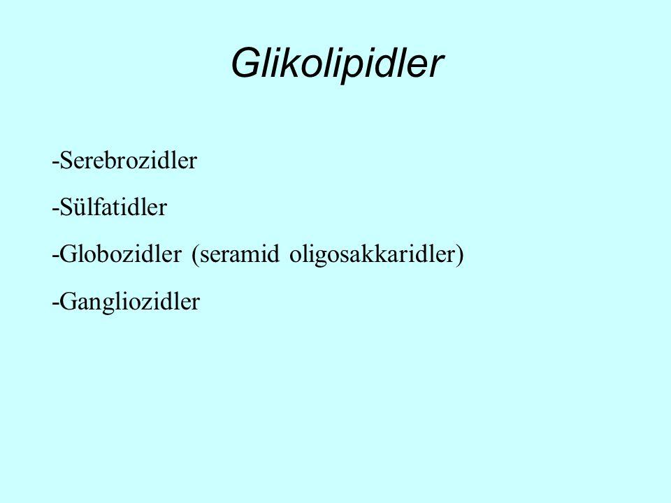 Glikolipidler -Serebrozidler -Sülfatidler