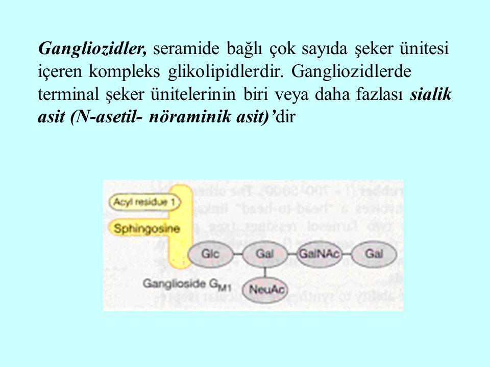 Gangliozidler, seramide bağlı çok sayıda şeker ünitesi içeren kompleks glikolipidlerdir.