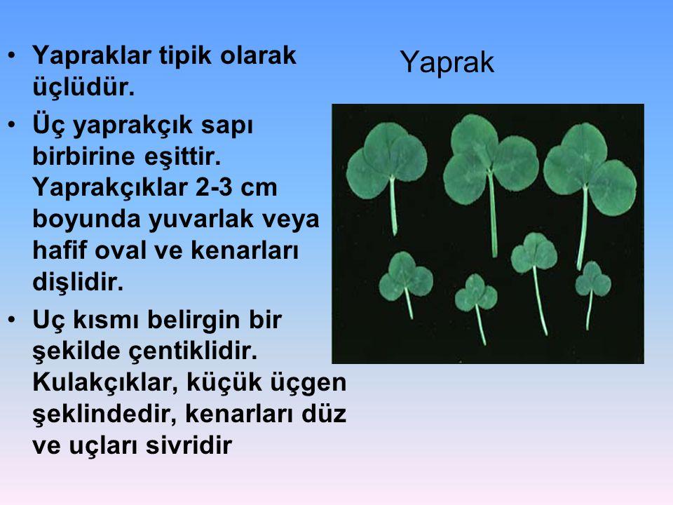 Yaprak Yapraklar tipik olarak üçlüdür.