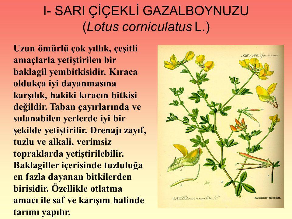 I- SARI ÇİÇEKLİ GAZALBOYNUZU (Lotus corniculatus L.)
