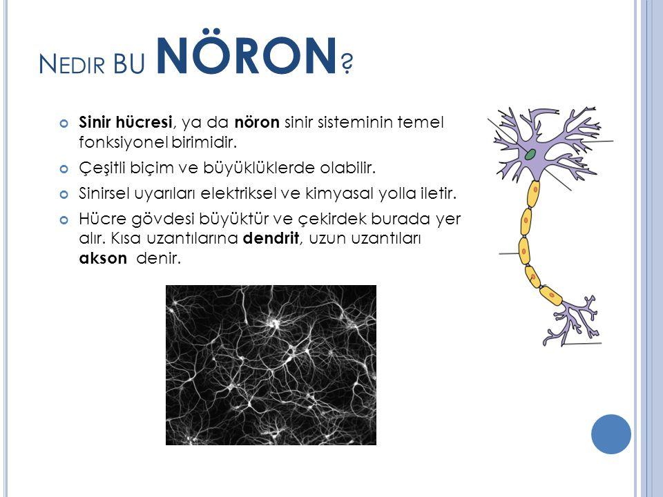 Nedir BU NÖRON Sinir hücresi, ya da nöron sinir sisteminin temel fonksiyonel birimidir. Çeşitli biçim ve büyüklüklerde olabilir.