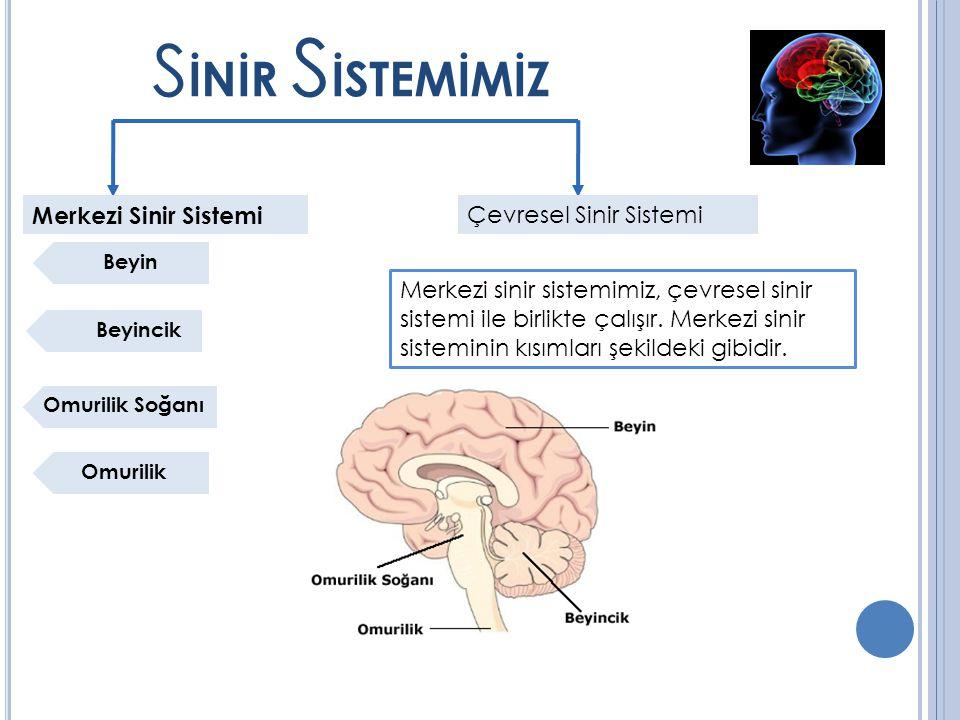 SİNİR SİSTEMİMİZ Merkezi Sinir Sistemi Çevresel Sinir Sistemi