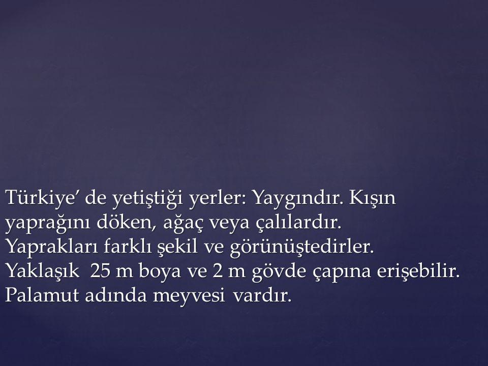 Türkiye' de yetiştiği yerler: Yaygındır