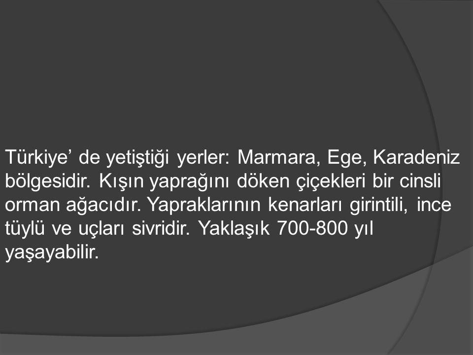 Türkiye' de yetiştiği yerler: Marmara, Ege, Karadeniz bölgesidir