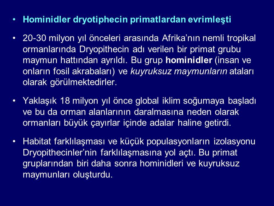Hominidler dryotiphecin primatlardan evrimleşti