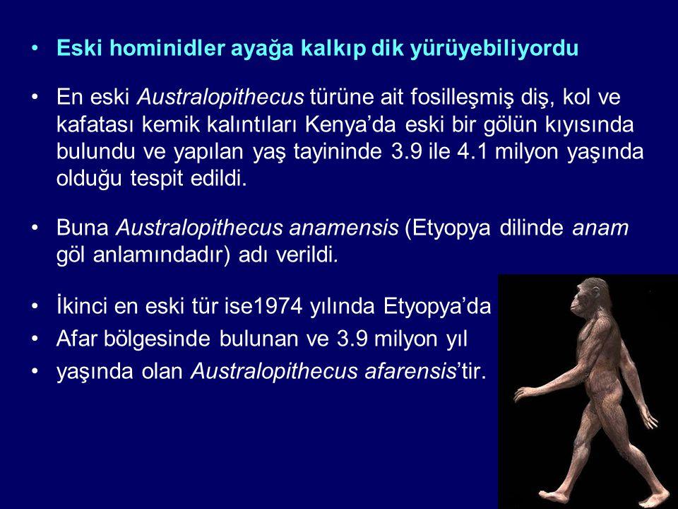 Eski hominidler ayağa kalkıp dik yürüyebiliyordu