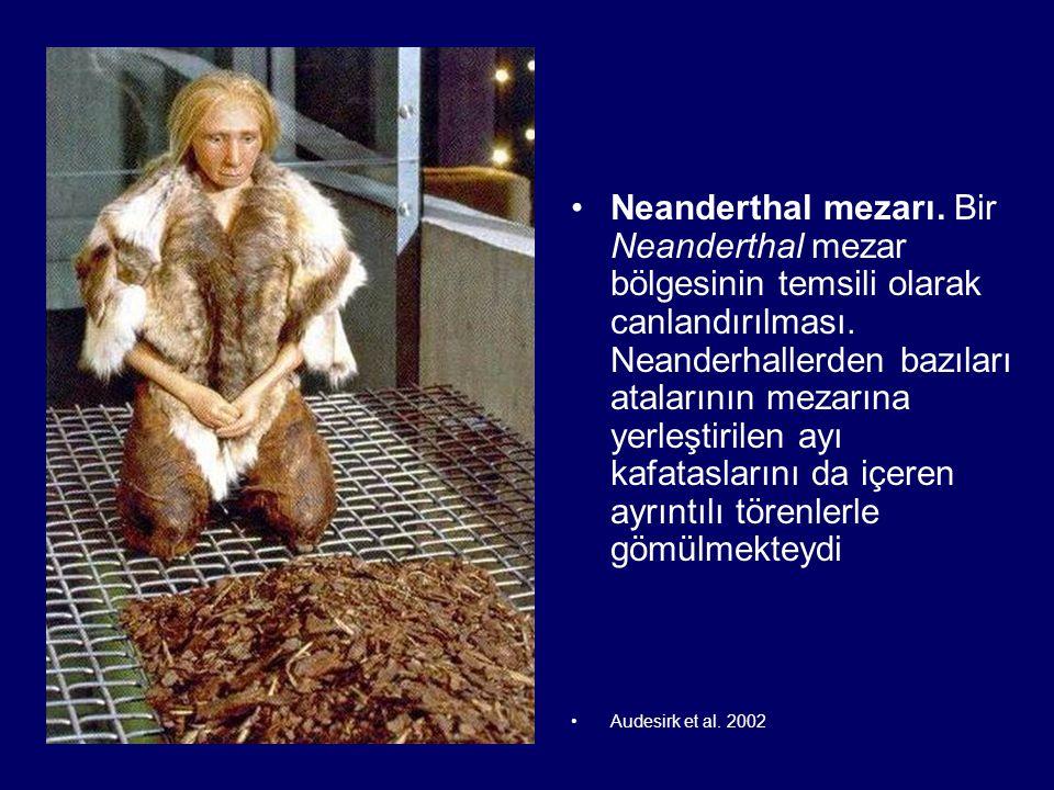 Neanderthal mezarı. Bir Neanderthal mezar bölgesinin temsili olarak canlandırılması. Neanderhallerden bazıları atalarının mezarına yerleştirilen ayı kafataslarını da içeren ayrıntılı törenlerle gömülmekteydi