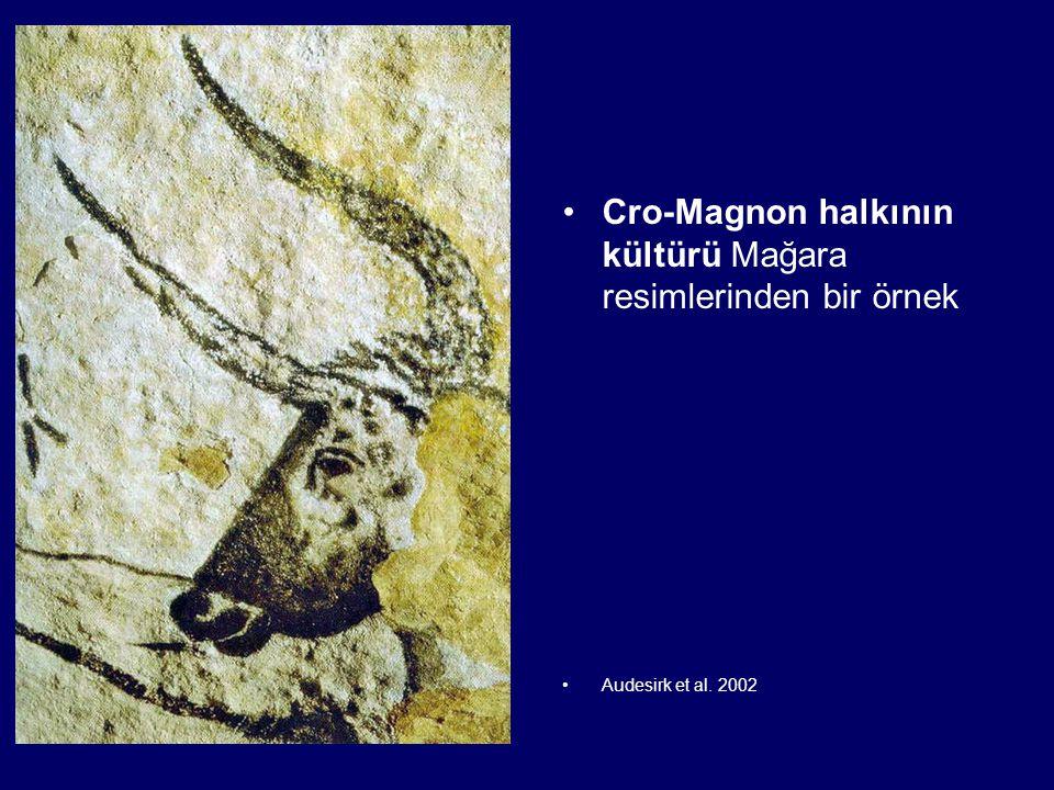 Cro-Magnon halkının kültürü Mağara resimlerinden bir örnek