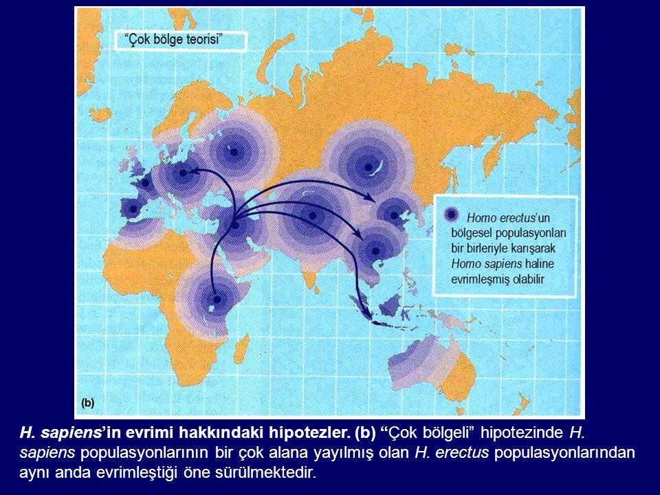 H. sapiens'in evrimi hakkındaki hipotezler