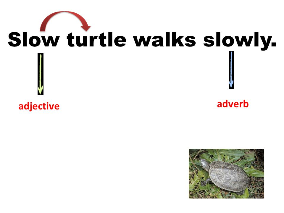 Slow turtle walks slowly.