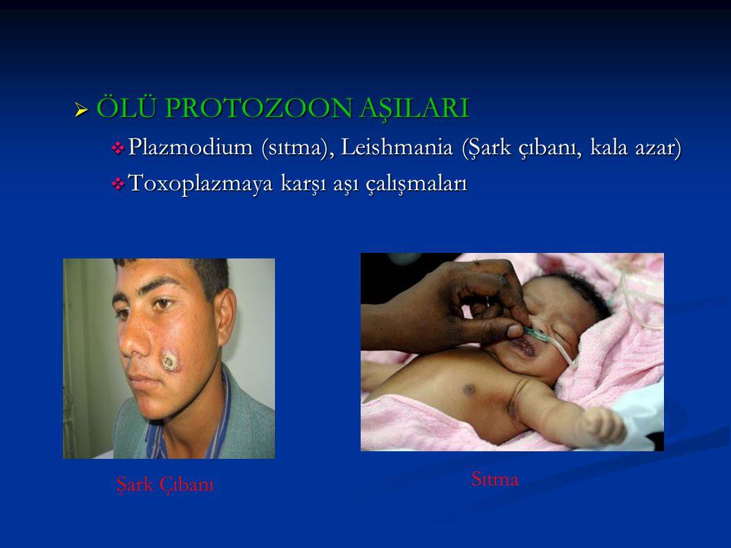 ÖLÜ PROTOZOON AŞILARI Plazmodium (sıtma), Leishmania (Şark çıbanı, kala azar) Toxoplazmaya karşı aşı çalışmaları.