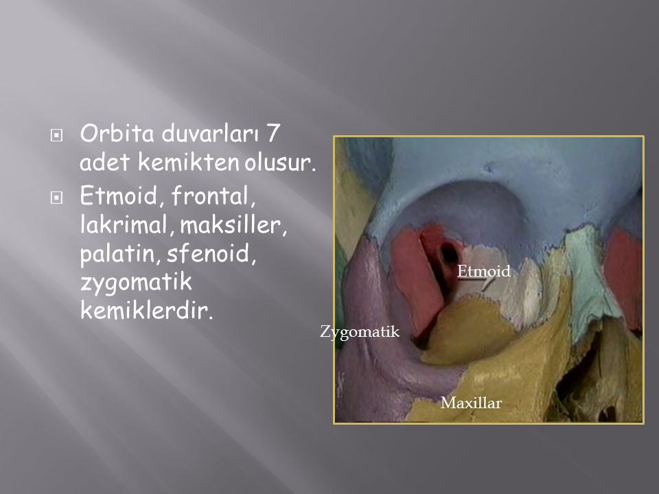 Orbita duvarları 7 adet kemikten olusur.
