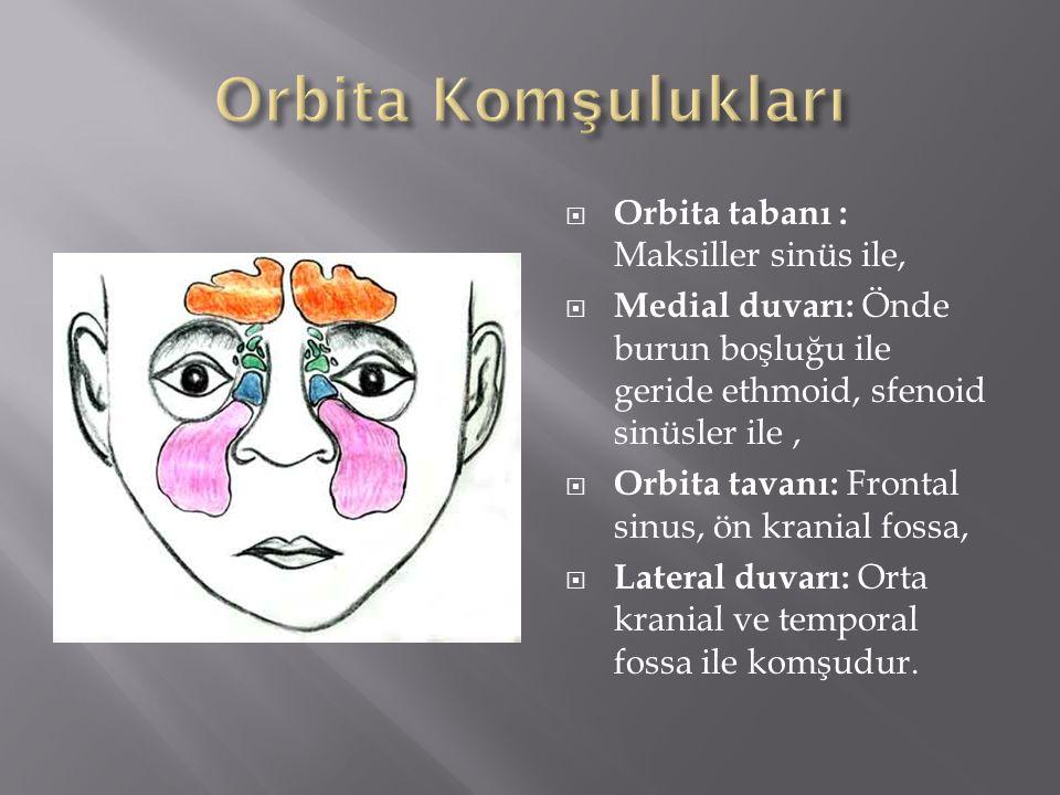 Orbita Komşulukları Orbita tabanı : Maksiller sinüs ile,