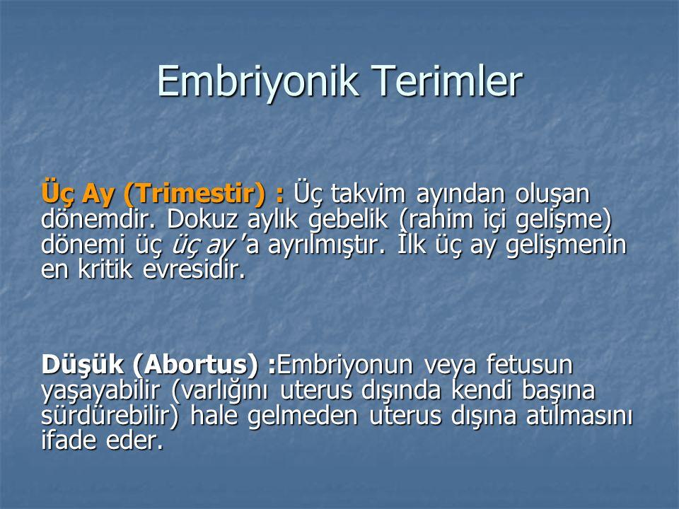 Embriyonik Terimler